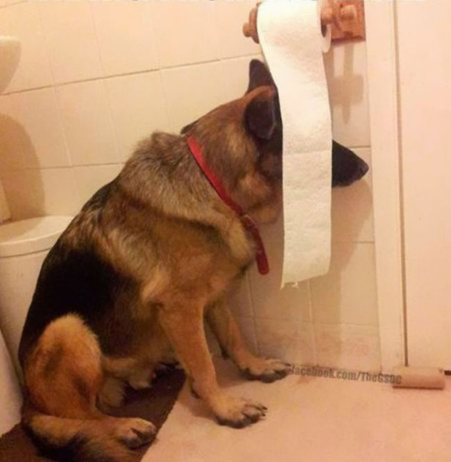 Dog-Hiding-Behind-Toilet-Paper
